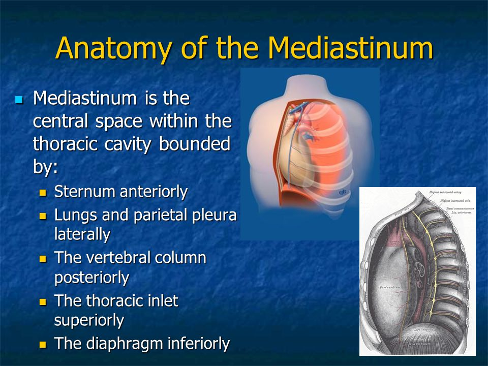 Diaphragma thoracic view