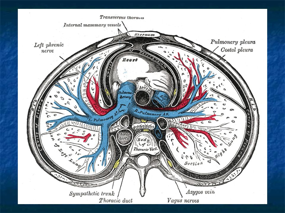 N.Spinalis and peripheric nerve pathologies N.