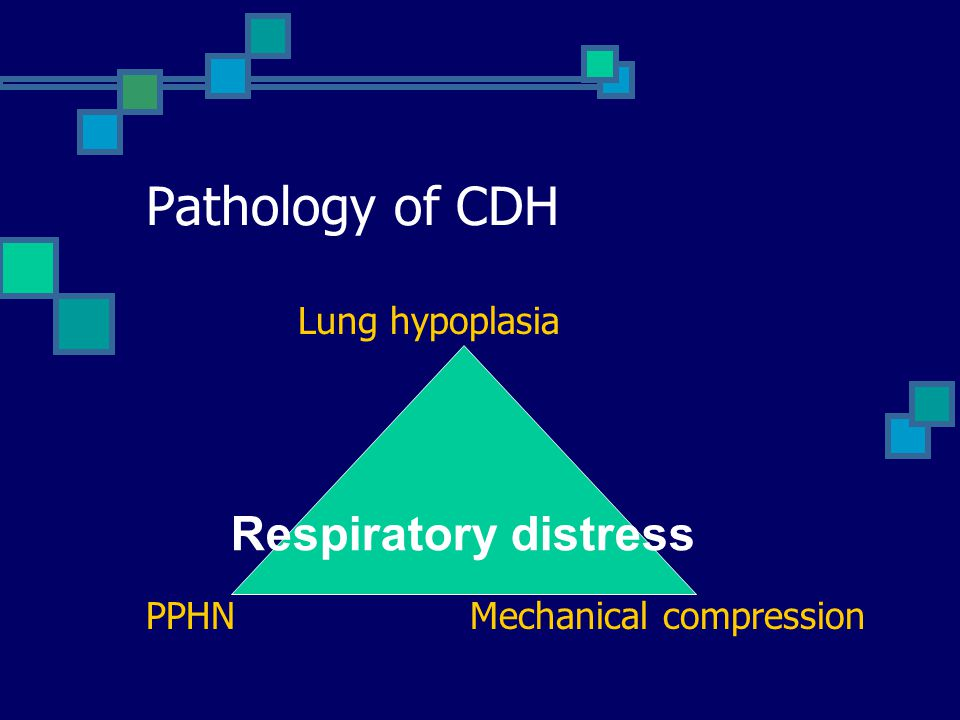 Pathology of CDH Lung hypoplasia PPHN Mechanical compression Respiratory distress