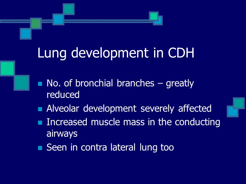 Lung development in CDH No. of bronchial branches – greatly reduced Alveolar development severely affected Increased muscle mass in the conducting air
