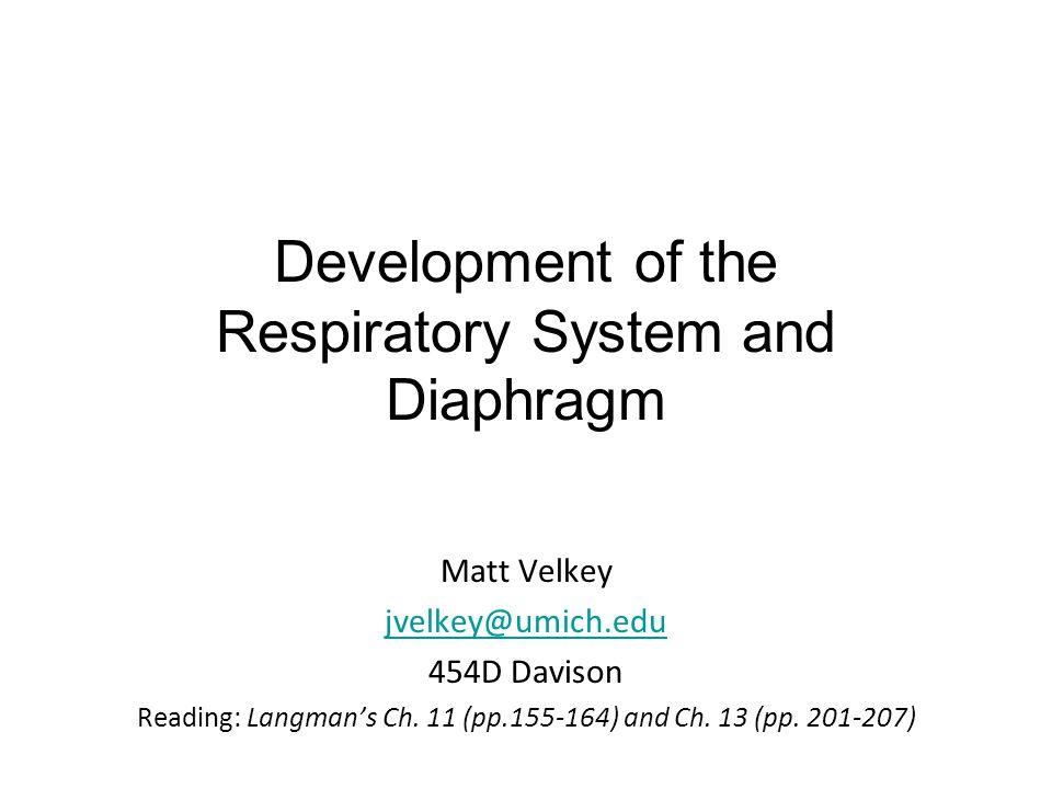 Development of the Respiratory System and Diaphragm Matt Velkey jvelkey@umich.edu 454D Davison Reading: Langman's Ch. 11 (pp.155-164) and Ch. 13 (pp.