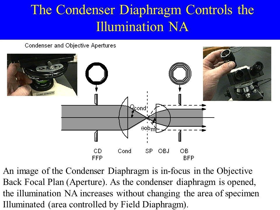 The Condenser Diaphragm Controls the Illumination NA An image of the Condenser Diaphragm is in-focus in the Objective Back Focal Plan (Aperture).