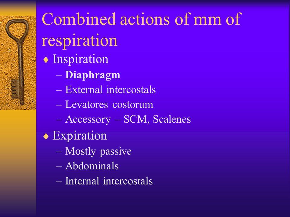 Combined actions of mm of respiration  Inspiration –Diaphragm –External intercostals –Levatores costorum –Accessory – SCM, Scalenes  Expiration –Mostly passive –Abdominals –Internal intercostals