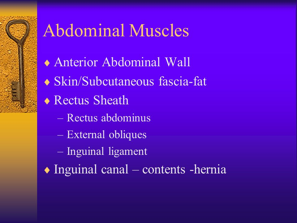 Abdominal Muscles  Anterior Abdominal Wall  Skin/Subcutaneous fascia-fat  Rectus Sheath –Rectus abdominus –External obliques –Inguinal ligament  Inguinal canal – contents -hernia