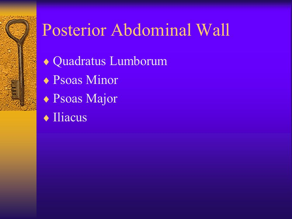 Posterior Abdominal Wall  Quadratus Lumborum  Psoas Minor  Psoas Major  Iliacus