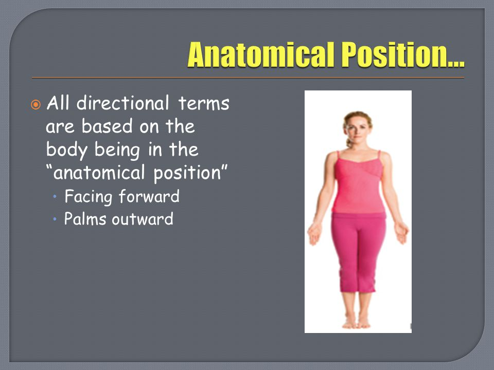 When navigating the body, directional terms help determine the exact location of a structure