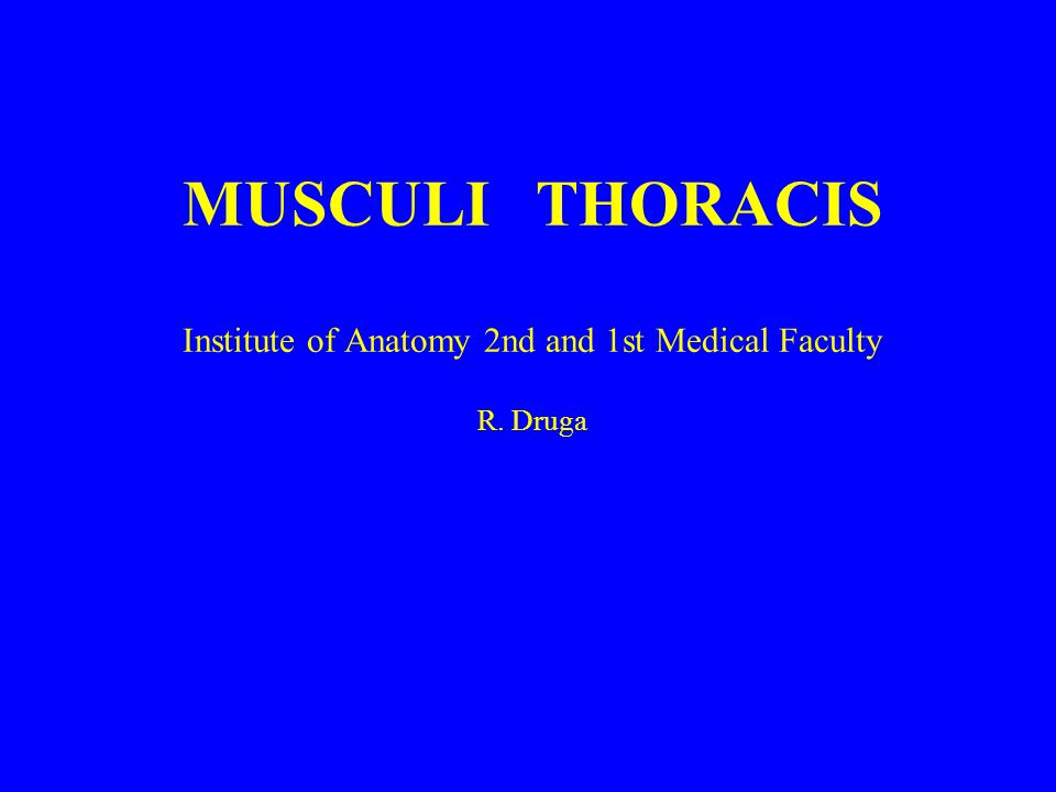 MUSCULI THORACIS Institute of Anatomy 2nd and 1st Medical Faculty R. Druga