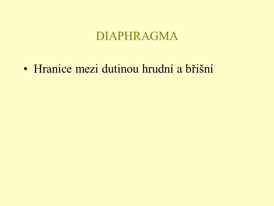 DIAPHRAGMA Hranice mezi dutinou hrudní a břišní