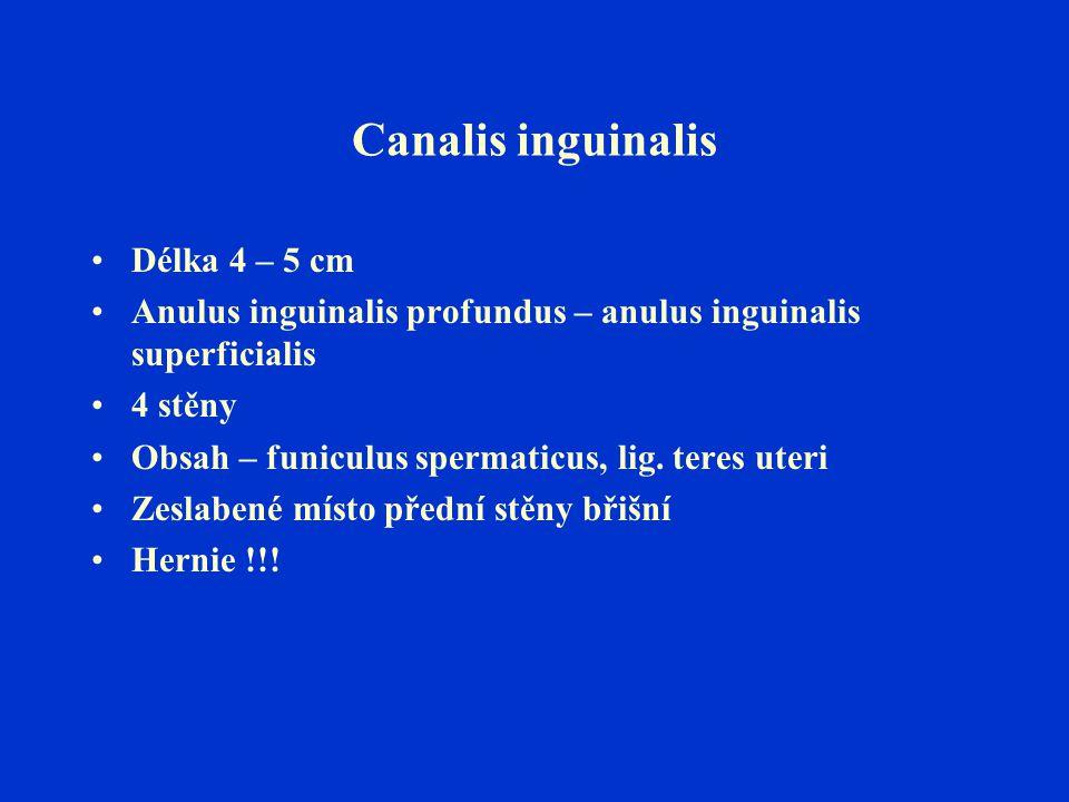 Canalis inguinalis Délka 4 – 5 cm Anulus inguinalis profundus – anulus inguinalis superficialis 4 stěny Obsah – funiculus spermaticus, lig. teres uter