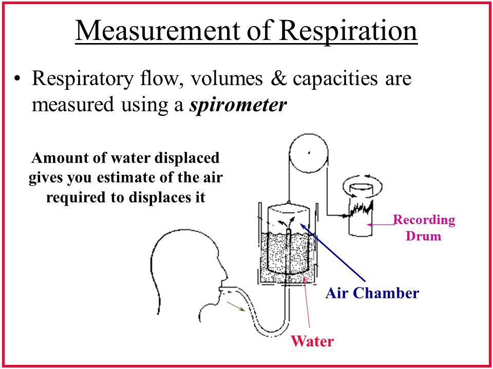 Measurement of Respiration Respiratory flow, volumes & capacities are measured using a spirometer Amount of water displaced gives you estimate of the air required to displaces it Air Chamber Water Recording Drum