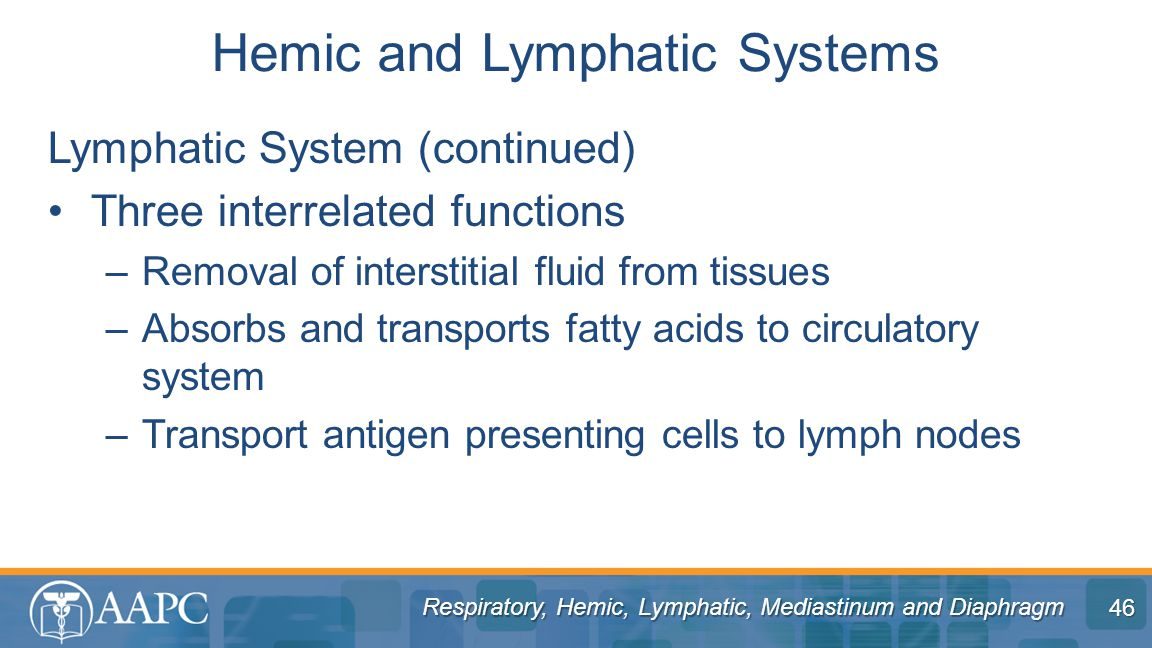 Respiratory, Hemic, Lymphatic, Mediastinum and Diaphragm Lymphatic System (continued) Three interrelated functions –Removal of interstitial fluid from tissues –Absorbs and transports fatty acids to circulatory system –Transport antigen presenting cells to lymph nodes Hemic and Lymphatic Systems 46