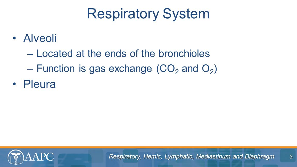 Respiratory, Hemic, Lymphatic, Mediastinum and Diaphragm Alveoli –Located at the ends of the bronchioles –Function is gas exchange (CO 2 and O 2 ) Pleura Respiratory System 5