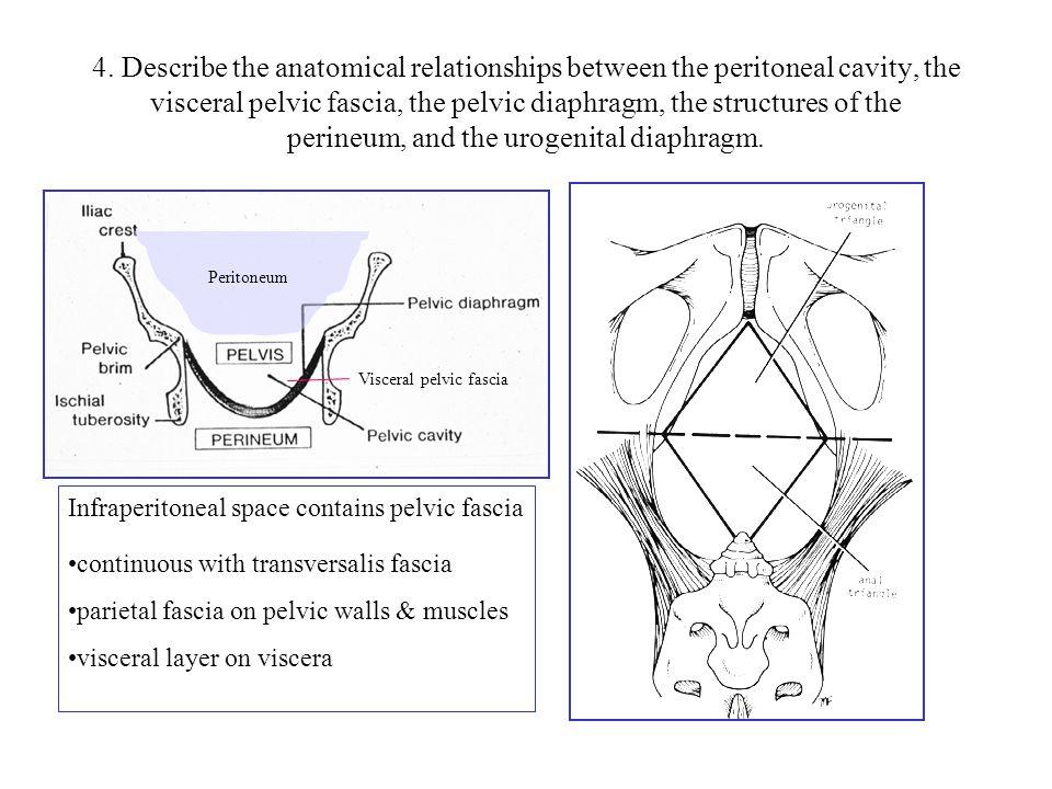 Innervation of Pelvic Organs Inferior hypogastric plexus Superior hypogastric plexus