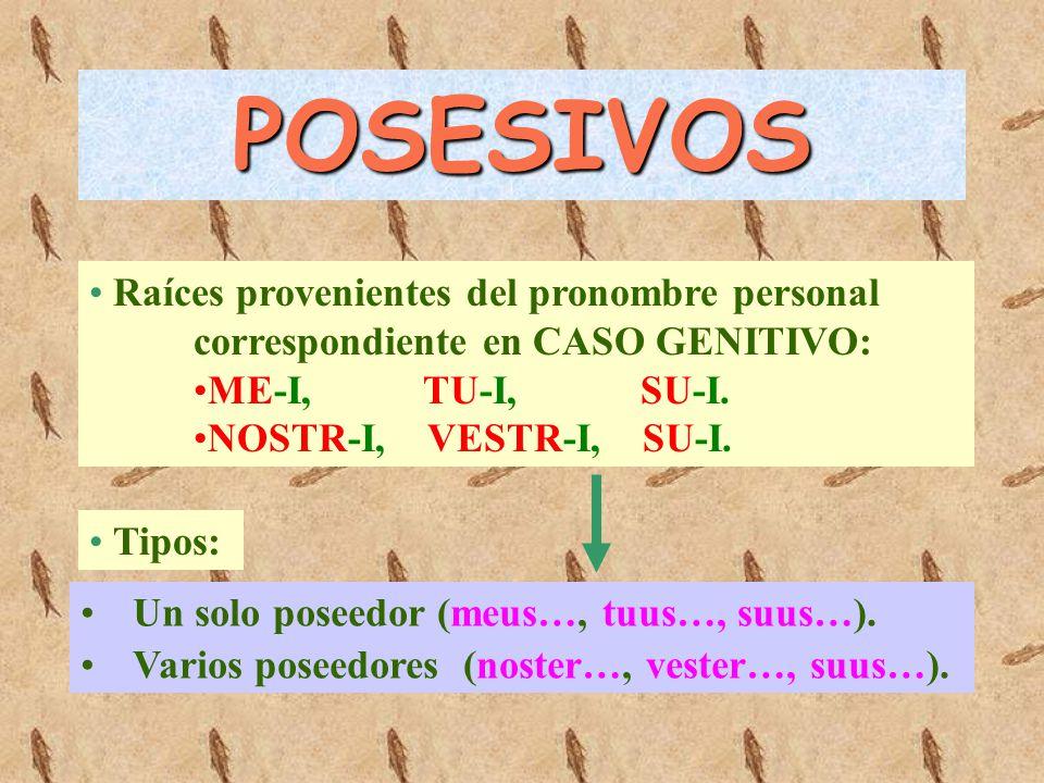 POSESIVOS Raíces provenientes del pronombre personal correspondiente en CASO GENITIVO: ME-I, TU-I, SU-I.