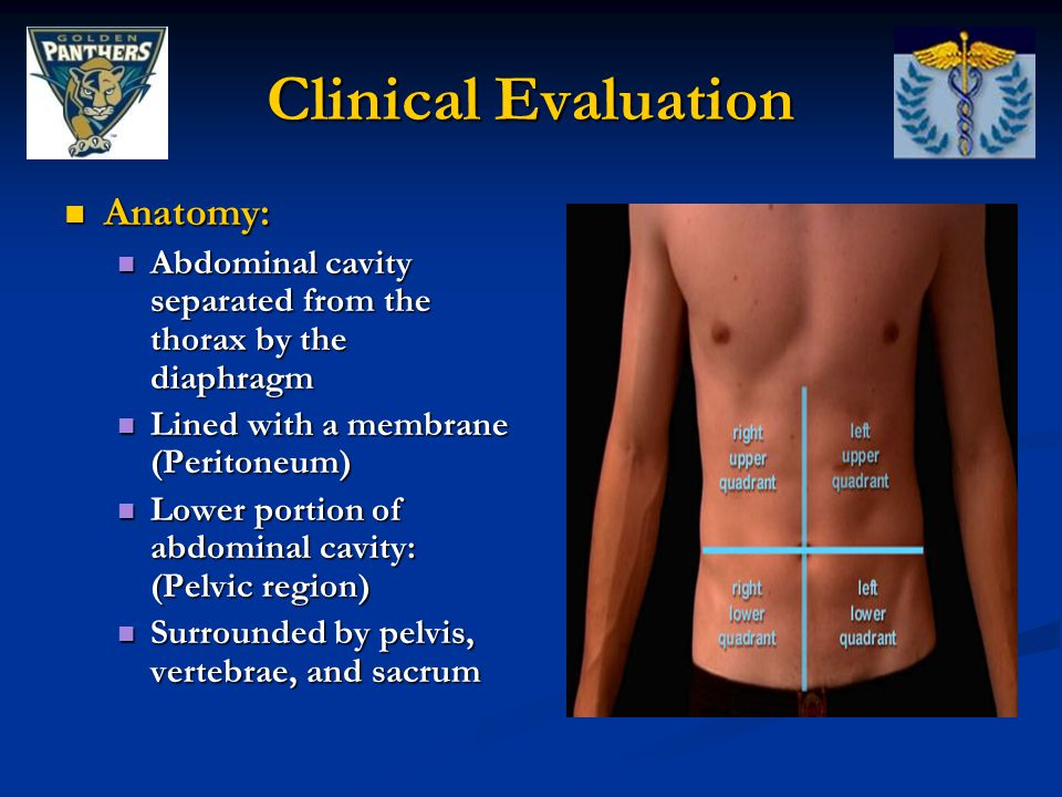 Clinical Evaluation Anatomy: Anatomy: Abdominal cavity separated from the thorax by the diaphragm Abdominal cavity separated from the thorax by the di