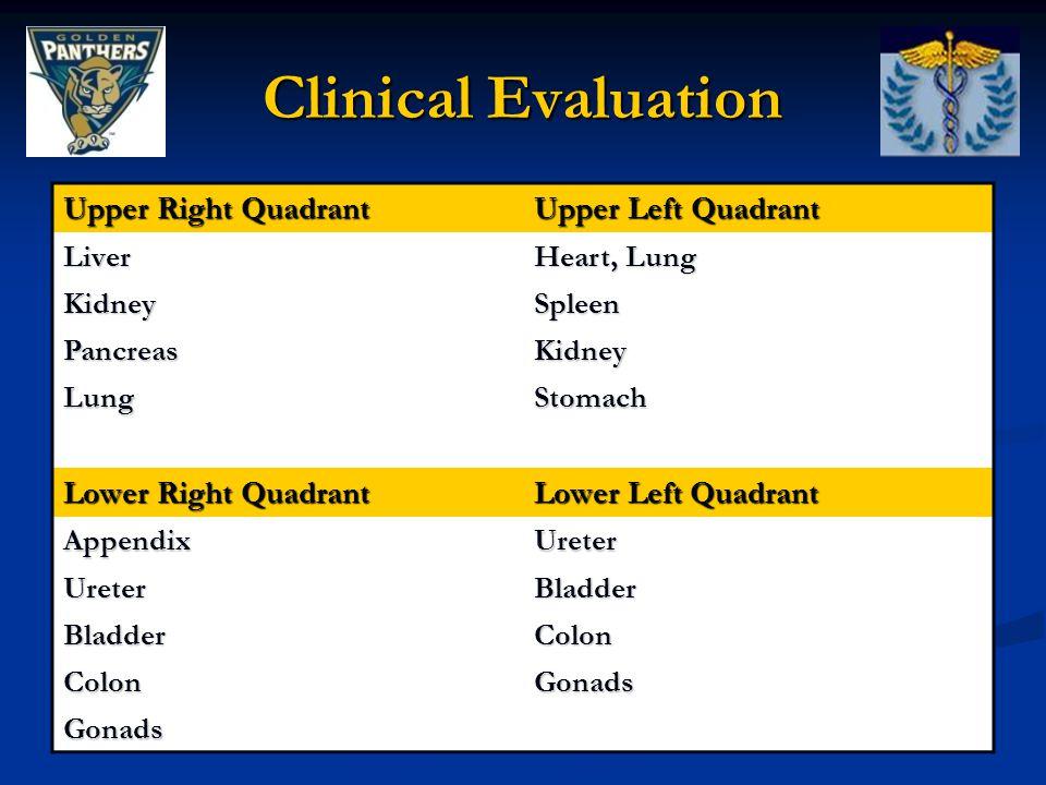Clinical Evaluation Upper Right Quadrant Upper Left Quadrant Liver Heart, Lung KidneySpleen PancreasKidney LungStomach Lower Right Quadrant Lower Left