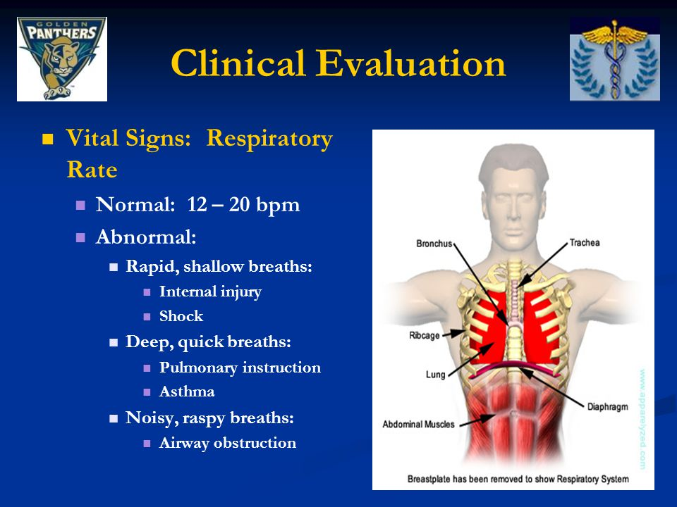 Clinical Evaluation Vital Signs: Respiratory Rate Normal: 12 – 20 bpm Abnormal: Rapid, shallow breaths: Internal injury Shock Deep, quick breaths: Pul
