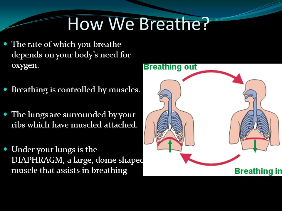 How We Breathe? The rate of which you breathe depends on your body's need for oxygen. Breathing is controlled by muscles. The lungs are surrounded by
