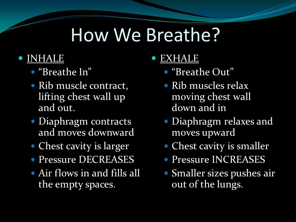 "How We Breathe? INHALE ""Breathe In"" Rib muscle contract, lifting chest wall up and out. Diaphragm contracts and moves downward Chest cavity is larger"