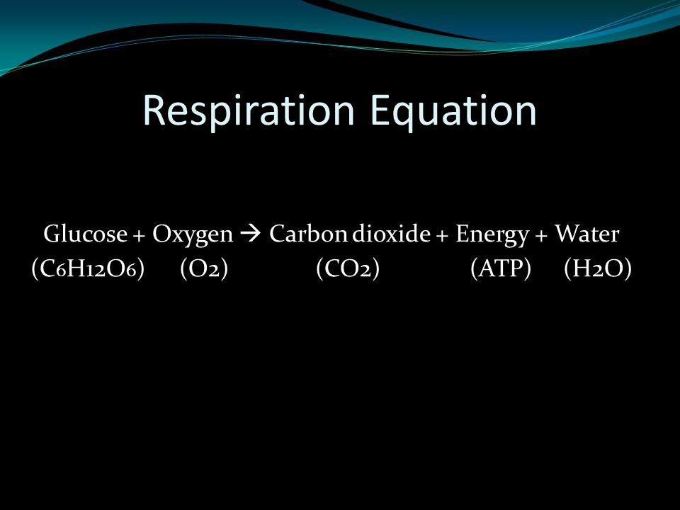 Respiration Equation Glucose + Oxygen  Carbon dioxide + Energy + Water (C 6 H12O 6 ) (O2) (CO2) (ATP) (H2O)