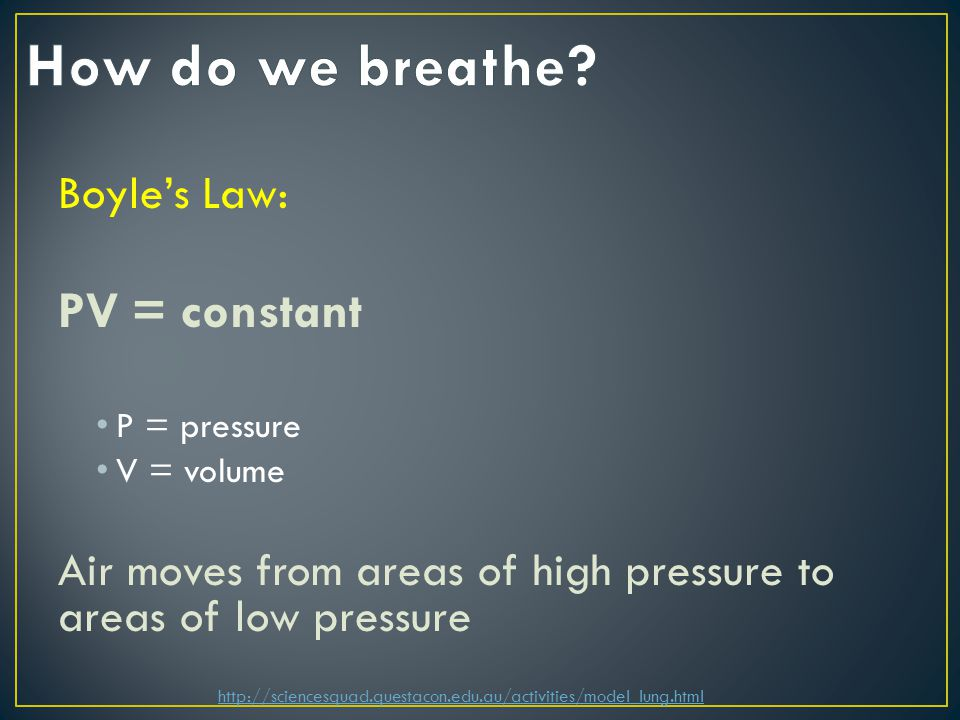 Boyle's Law: PV = constant P = pressure V = volume Air moves from areas of high pressure to areas of low pressure http://sciencesquad.questacon.edu.au/activities/model_lung.html