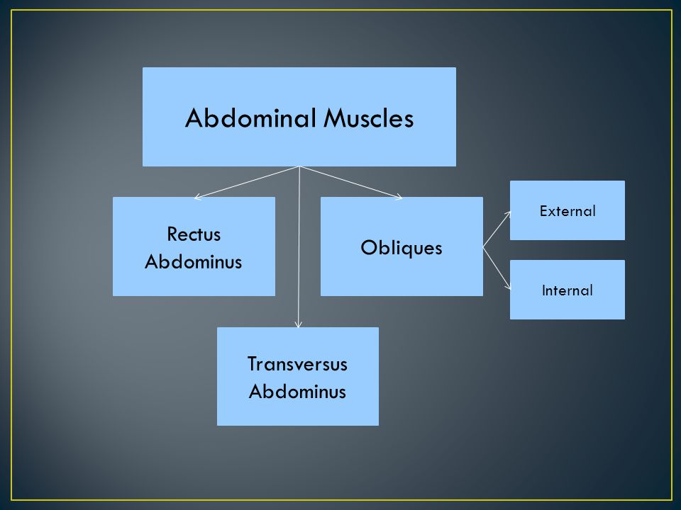 Abdominal Muscles Rectus Abdominus Obliques Transversus Abdominus Internal External