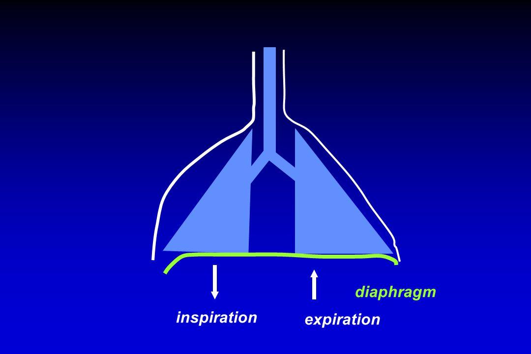 diaphragm inspiration expiration