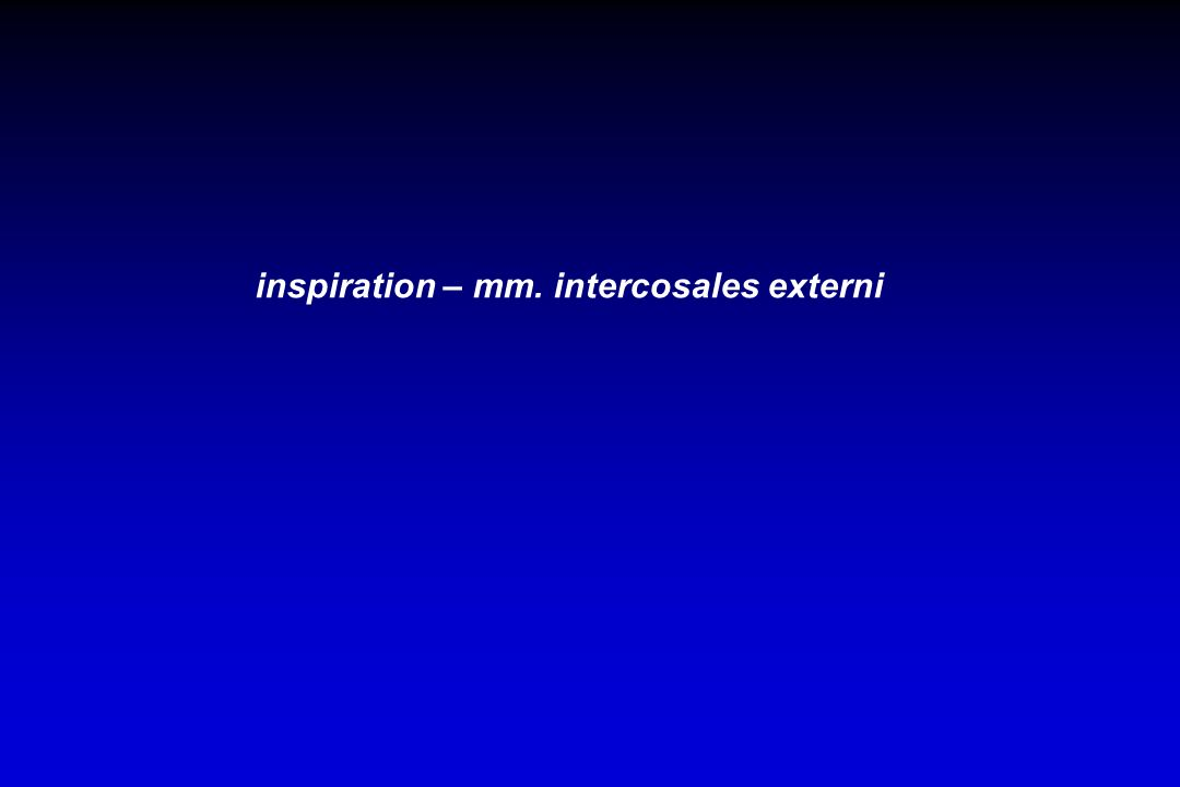 inspiration – mm. intercosales externi
