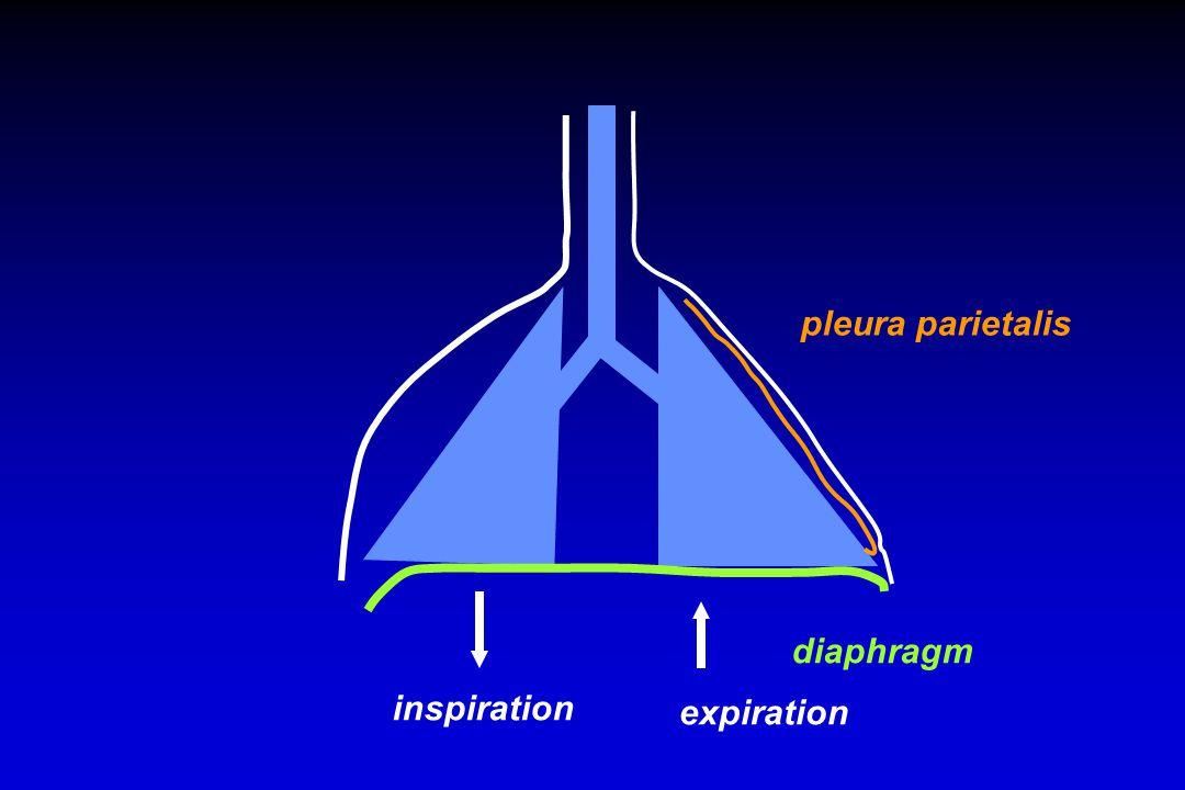 diaphragm inspiration expiration pleura parietalis