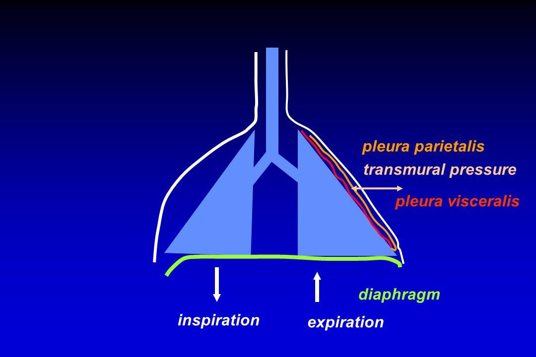 diaphragm inspiration expiration pleura parietalis pleura visceralis transmural pressure