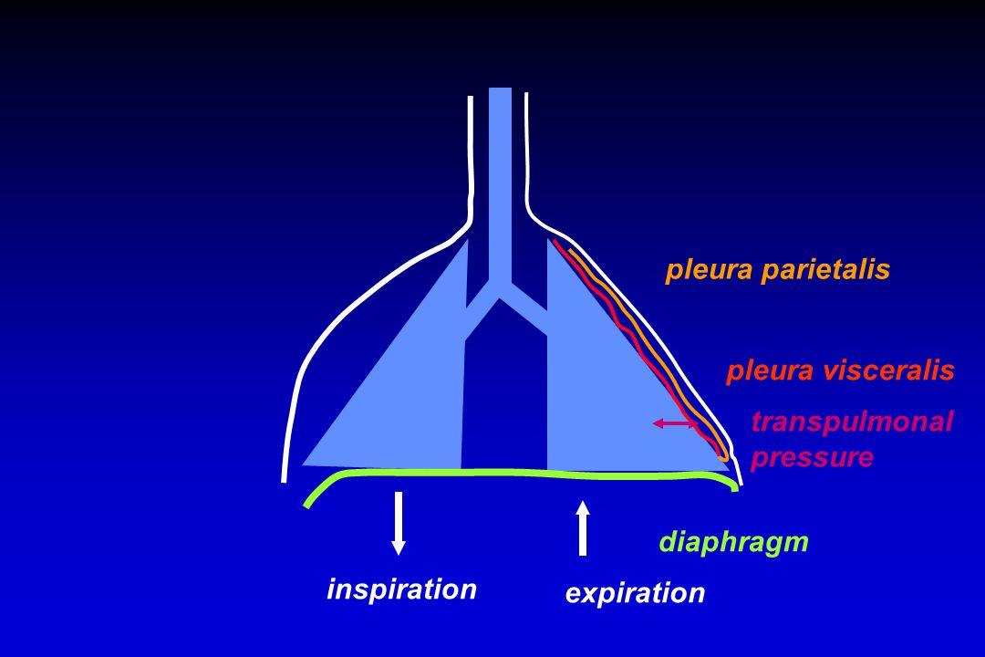 diaphragm inspiration expiration pleura parietalis pleura visceralis transpulmonal pressure