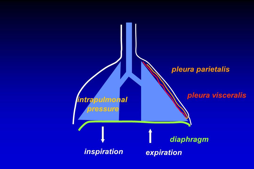 diaphragm inspiration expiration pleura parietalis pleura visceralis intrapulmonal pressure