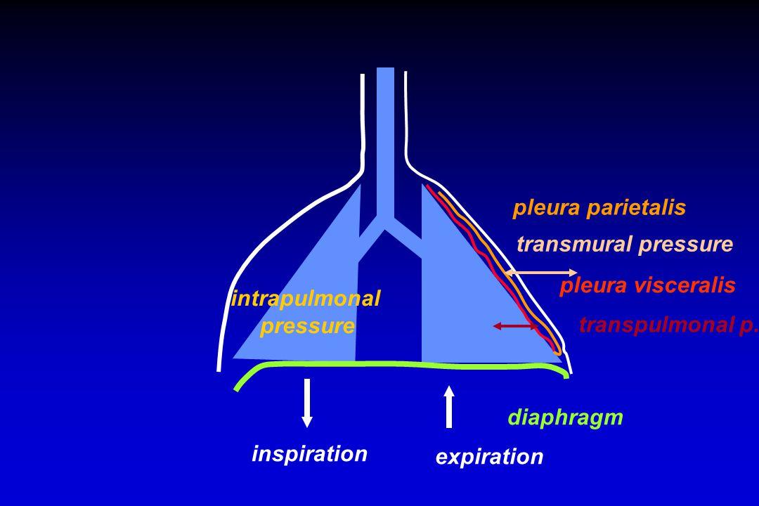 diaphragm inspiration expiration pleura parietalis pleura visceralis transmural pressure transpulmonal p.