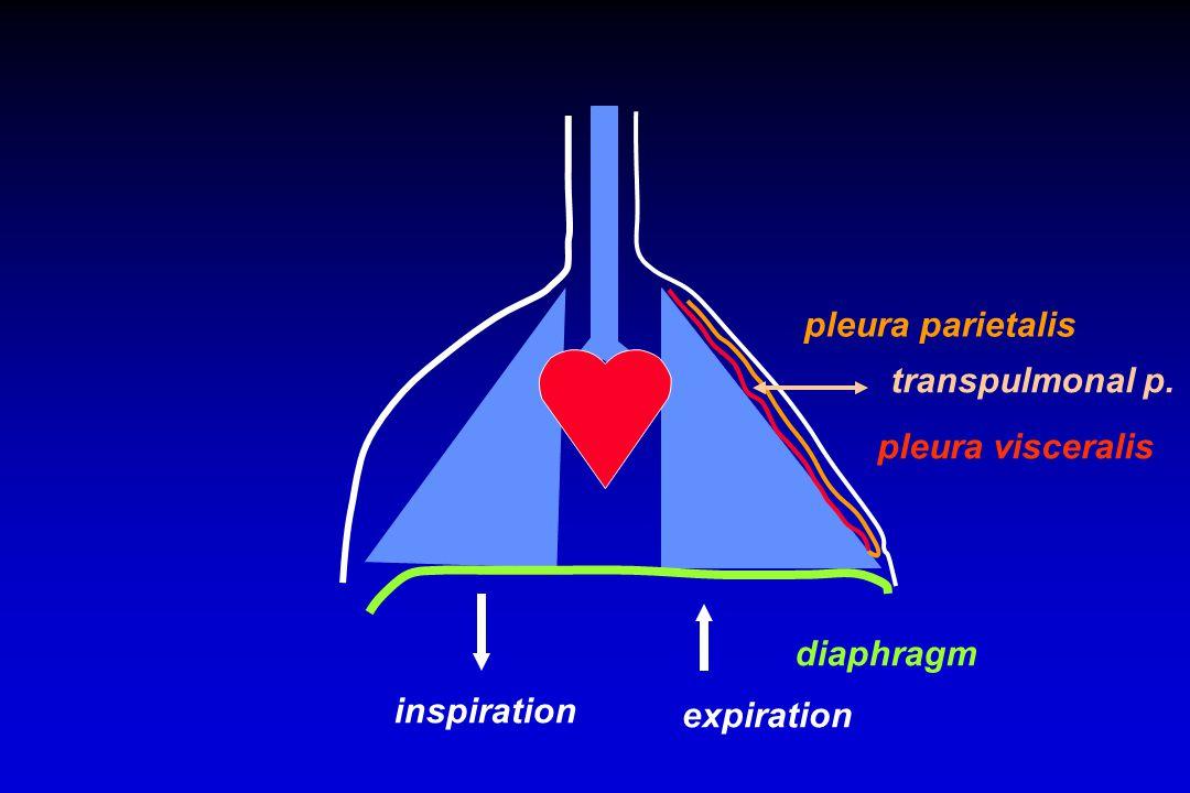 diaphragm inspiration expiration pleura parietalis pleura visceralis transpulmonal p.