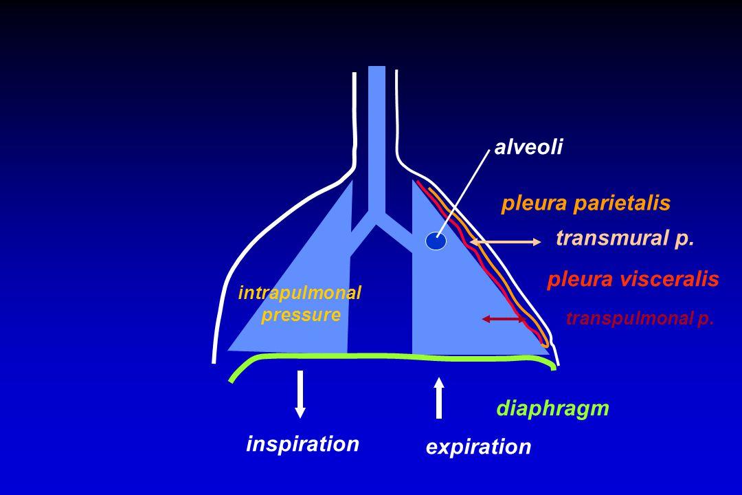 diaphragm inspiration expiration pleura parietalis pleura visceralis transmural p.