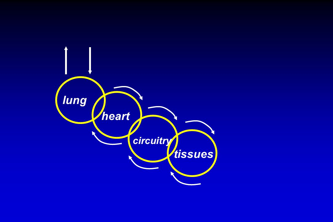 lung heart circuitry tissues