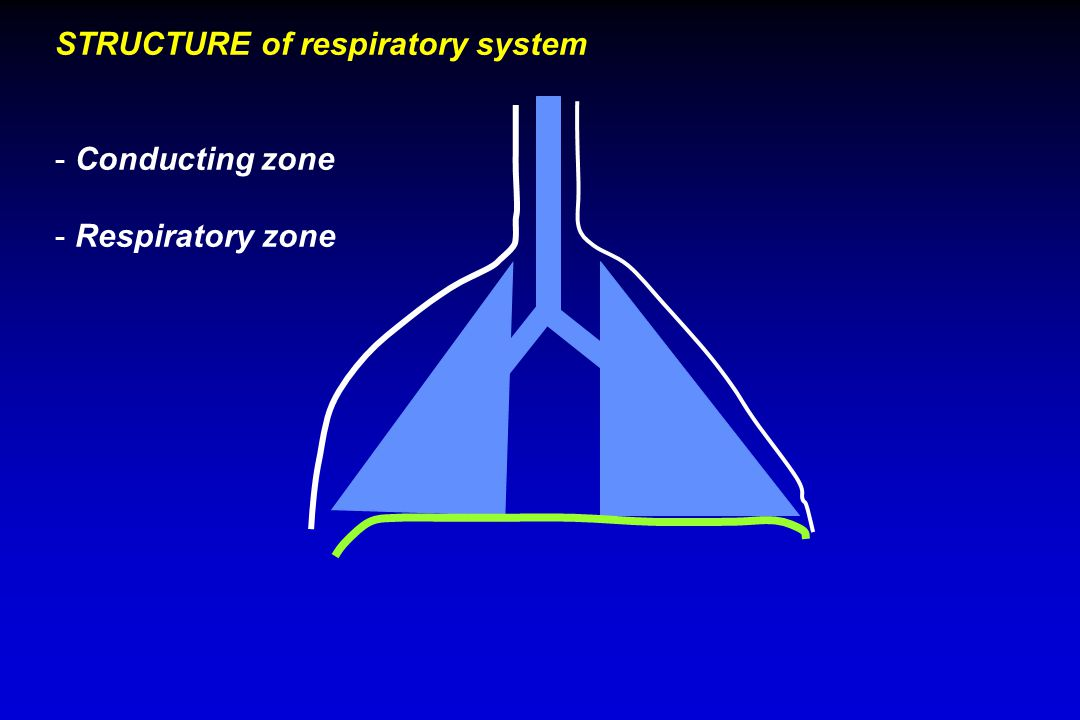 STRUCTURE of respiratory system - Conducting zone - Respiratory zone