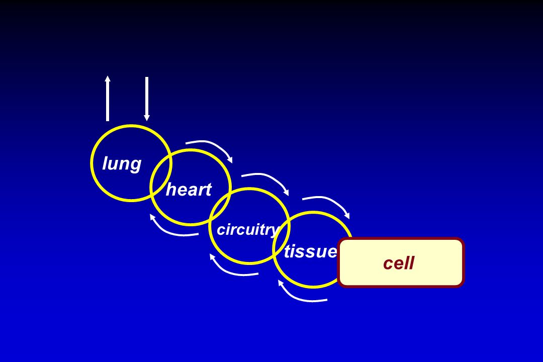 lung heart circuitry tissues cell