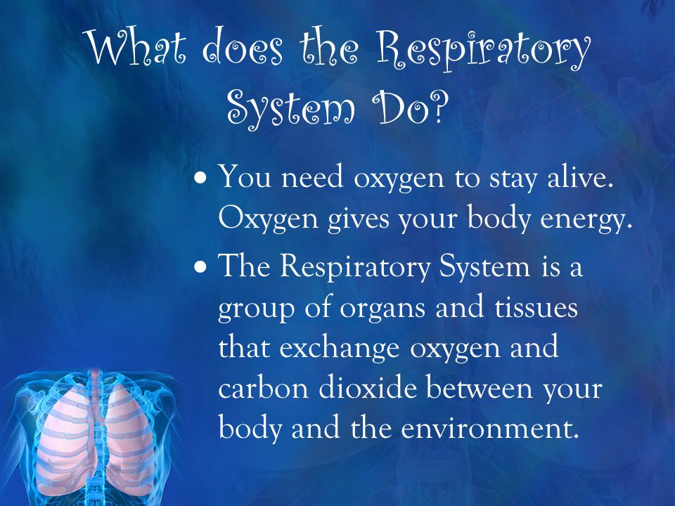 Essential Questions What are the major systems of the human body? How does the Respiratory System help my body function? What are the major parts of t