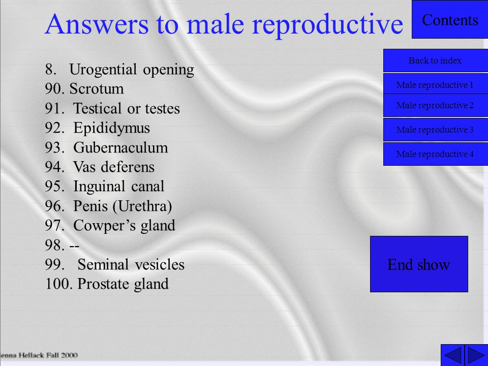 Contents Answers to male reproductive 8.Urogential opening 90.Scrotum 91.