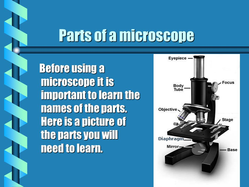 This presentation is a short introduction to the parts of a microscope. After learning the parts you will take a short quiz. This presentation is a sh