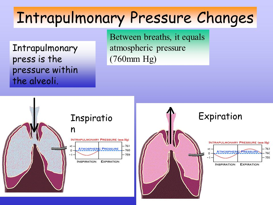 Lets Recap Inspiration Diaphragm and external intercostals contract Volume of thoracic cavity increases Lungs expand Intrapulmonary pressure becomes negative Air flows into the lungs