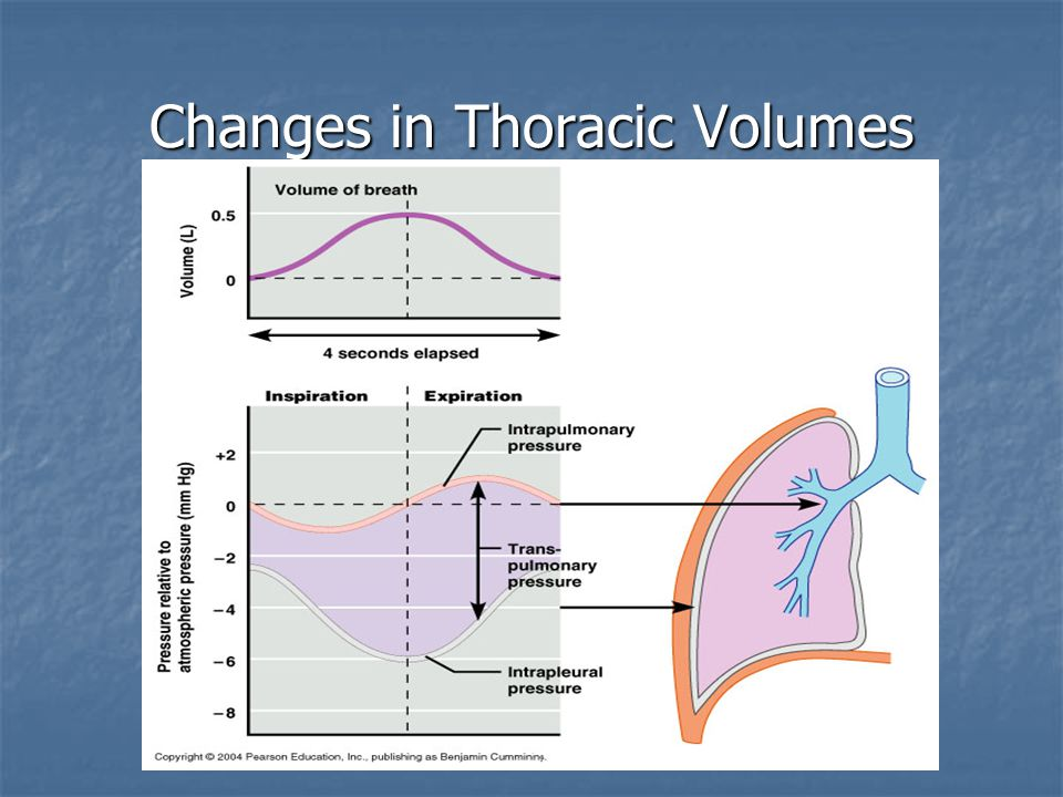 Factors Influencing Pulmonary Ventilation Airway Resistance: Airway Resistance: Amount of drag air encounters in respiratory passageways; not significant since airway diameters are large and at terminal bronchioles gasses travel by diffusion Amount of drag air encounters in respiratory passageways; not significant since airway diameters are large and at terminal bronchioles gasses travel by diffusion Surface Tension: Surface Tension: At gas-liquid boundaries, liquids are more attracted to each other (cohesiveness), surfacant at the alveoli keeps water from being cohesive and allows alveoli to be more functional (less energy needed for breathing) At gas-liquid boundaries, liquids are more attracted to each other (cohesiveness), surfacant at the alveoli keeps water from being cohesive and allows alveoli to be more functional (less energy needed for breathing) Lung Compliance: Lung Compliance: The distensibility of the lungs, ability to stretch; higher compliance leads to better ventilation (fibrosis, airway blockages, decreased surfacant, and decreased thoracic cage flexibility lead to less compliance) The distensibility of the lungs, ability to stretch; higher compliance leads to better ventilation (fibrosis, airway blockages, decreased surfacant, and decreased thoracic cage flexibility lead to less compliance)