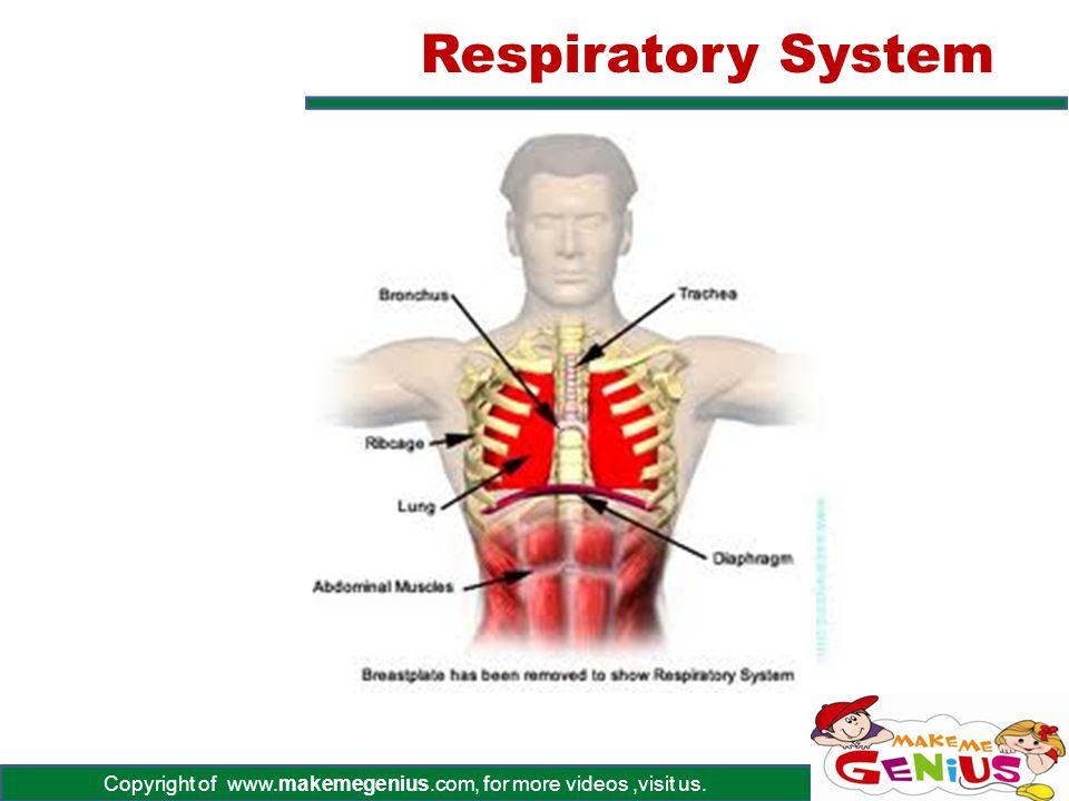 Copyright of www.makemegenius.com, for more videos,visit us. Respiratory System