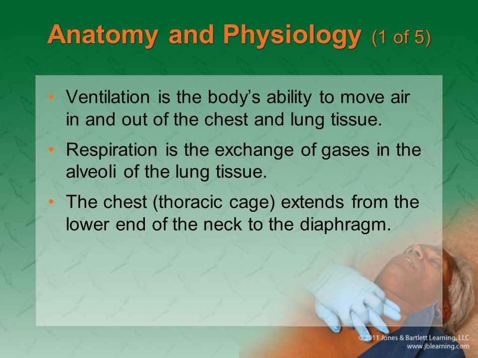 Primary Assessment (3 of 8) Airway and breathing –Ensure that the patient has a clear and patent airway.