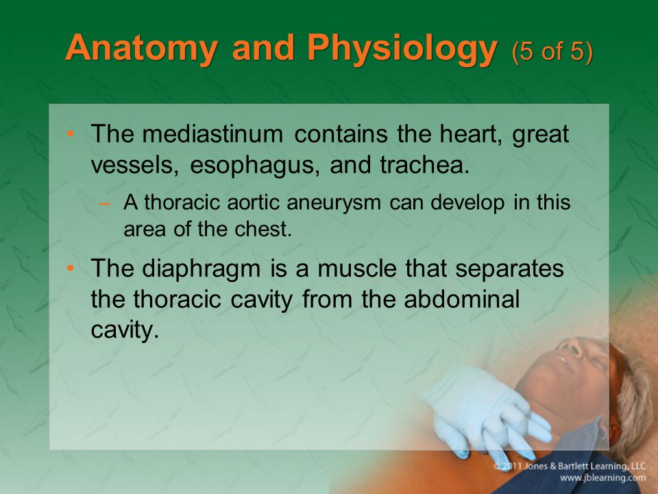 Anatomy and Physiology (5 of 5) The mediastinum contains the heart, great vessels, esophagus, and trachea. –A thoracic aortic aneurysm can develop in