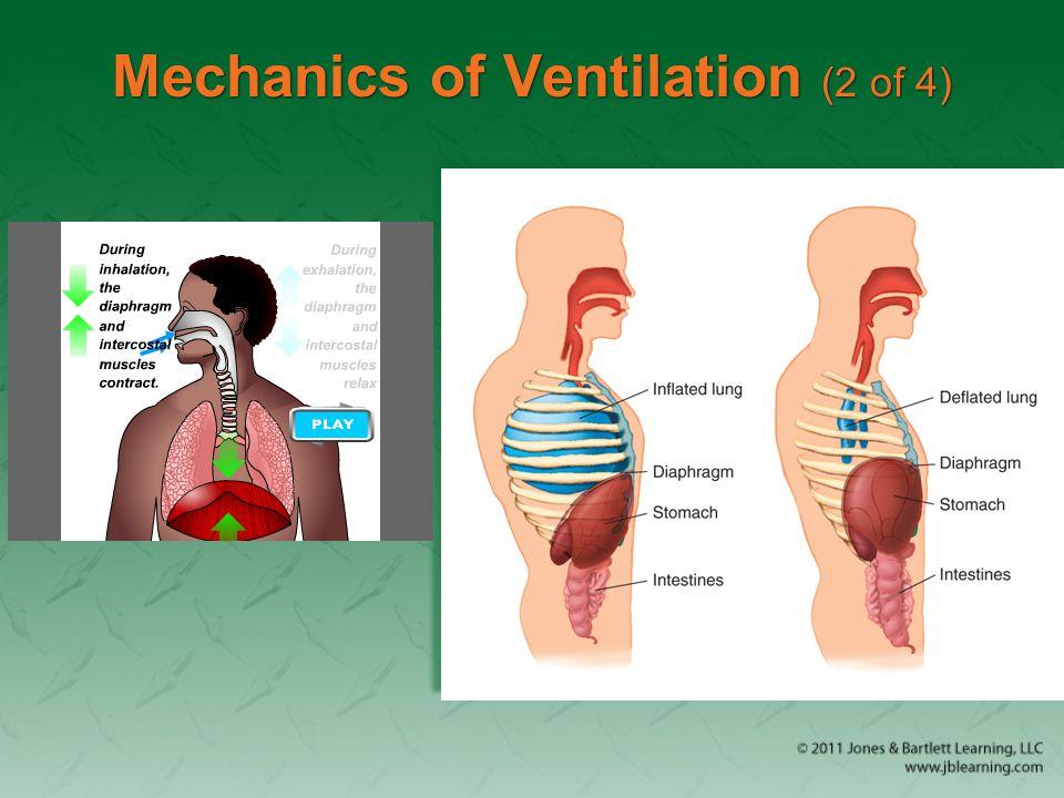 Hemothorax (2 of 3)