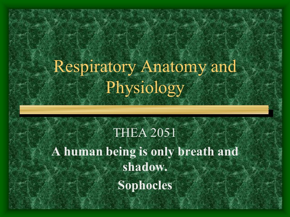 Respiratory Anatomy and Physiology THEA 2051 A human being is only breath and shadow. Sophocles