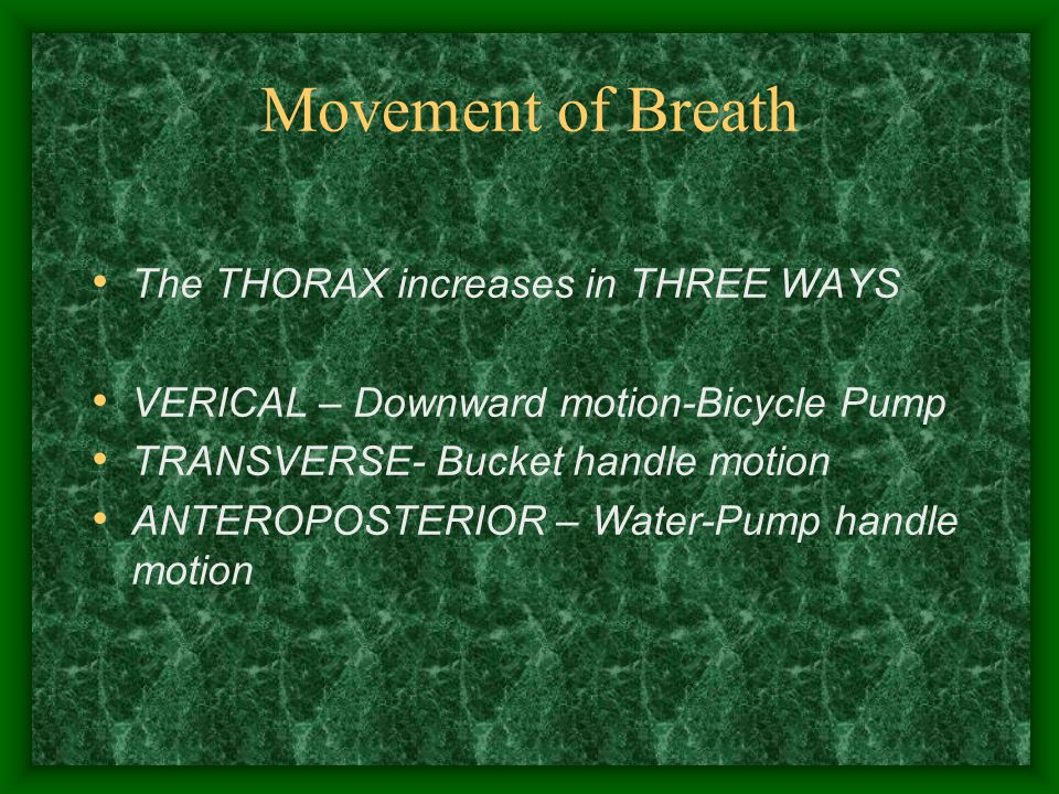 Movement of Breath The THORAX increases in THREE WAYS VERICAL – Downward motion-Bicycle Pump TRANSVERSE- Bucket handle motion ANTEROPOSTERIOR – Water-Pump handle motion