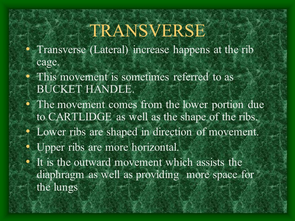 TRANSVERSE Transverse (Lateral) increase happens at the rib cage.